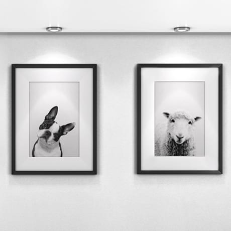 Animal Photos in Gallery with White Mat and Black Frame