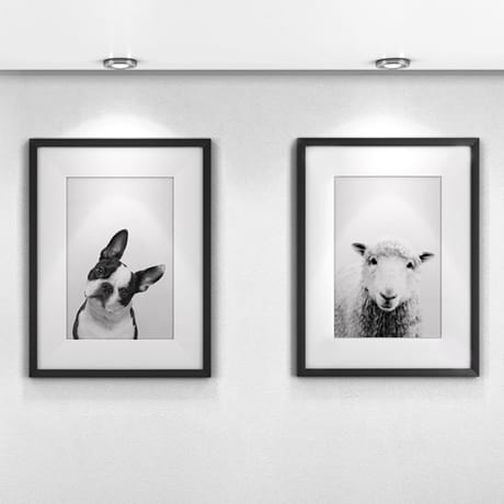 Custom Prints of Animals in Black Picture Frames with White Mats
